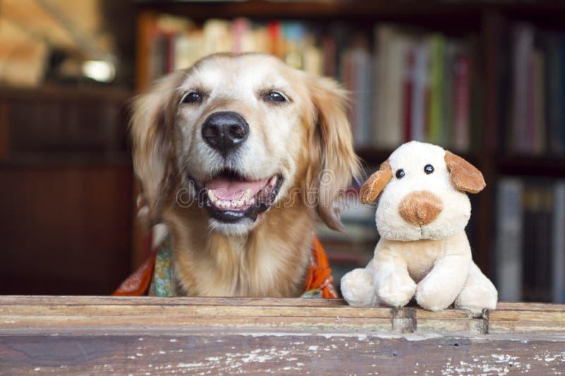狗和朋友狗玩具 图库摄影