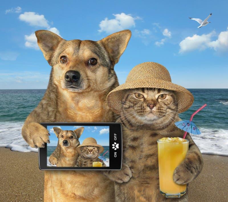 狗和猫在海滩2做了selfie 库存照片