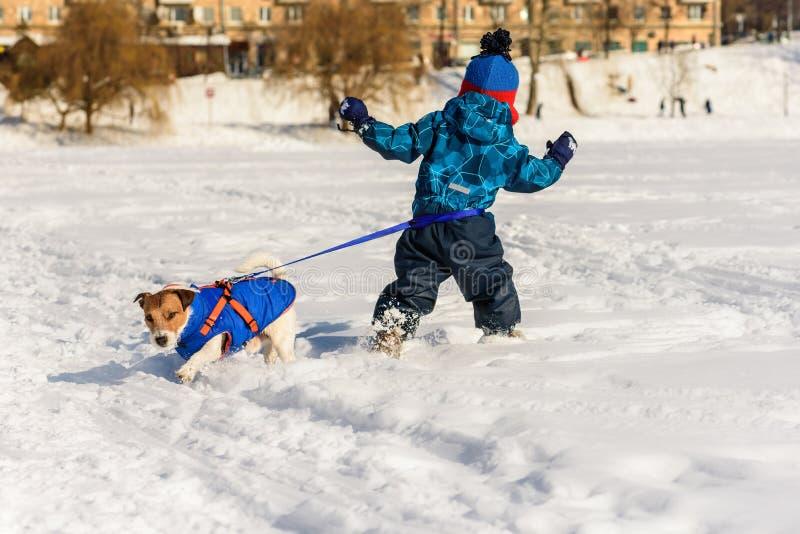 狗和男孩结合与拉扯用不同的方向的腰部皮带 免版税库存图片