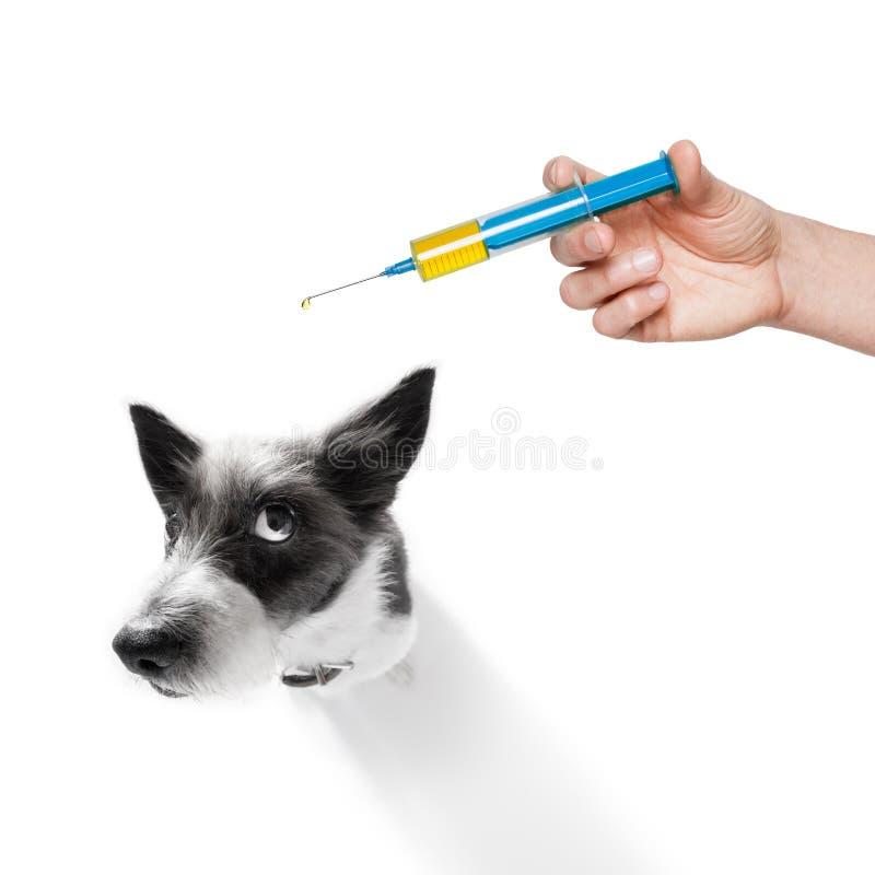狗和疫苗注射器 免版税图库摄影