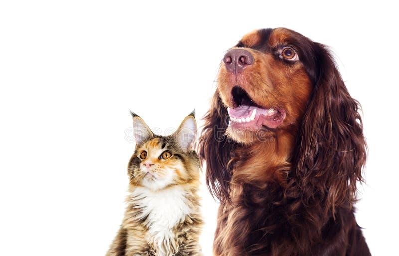 狗和看的猫斜向一边 免版税库存照片