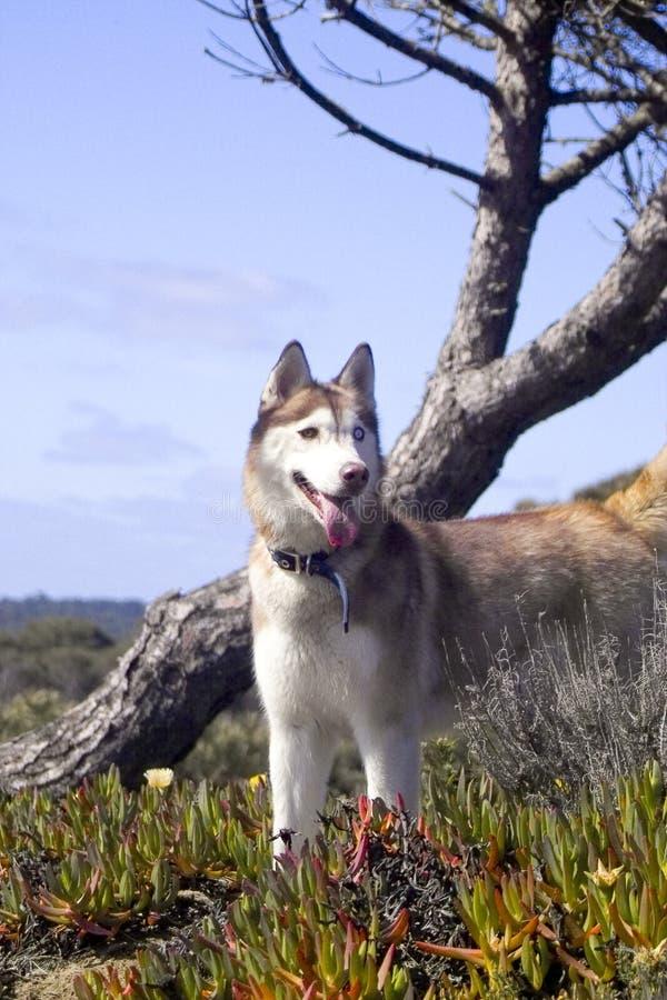 狗和结构树 免版税库存图片