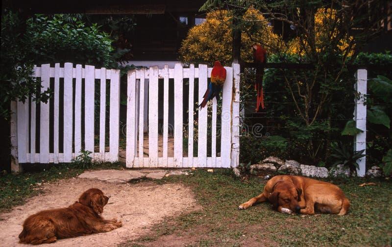 狗和鹦鹉休息 免版税库存照片