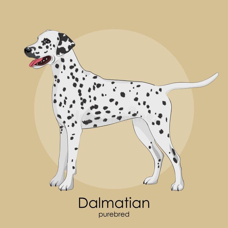 狗品种达尔马提亚狗 皇族释放例证