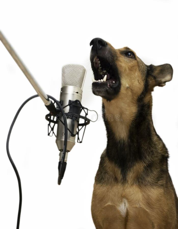 狗唱歌 免版税库存照片