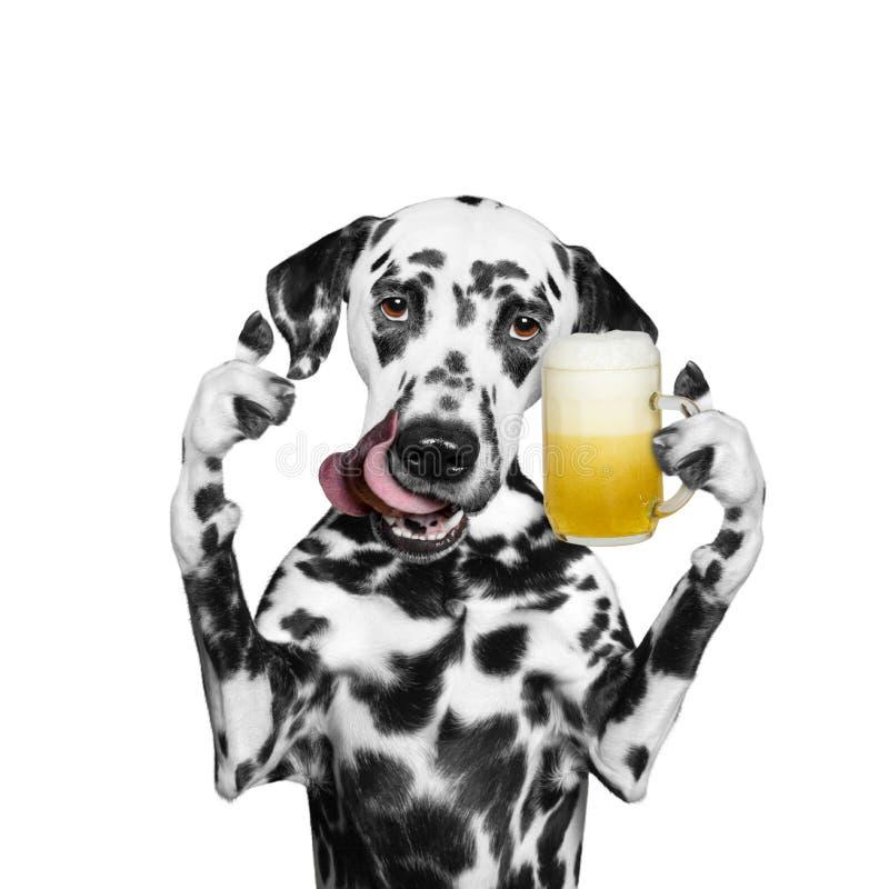 狗喝啤酒和问候某人 免版税库存照片
