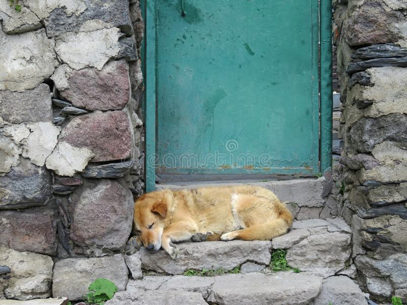 狗在一个房子的门阶睡觉在乔治亚 _ 免版税图库摄影