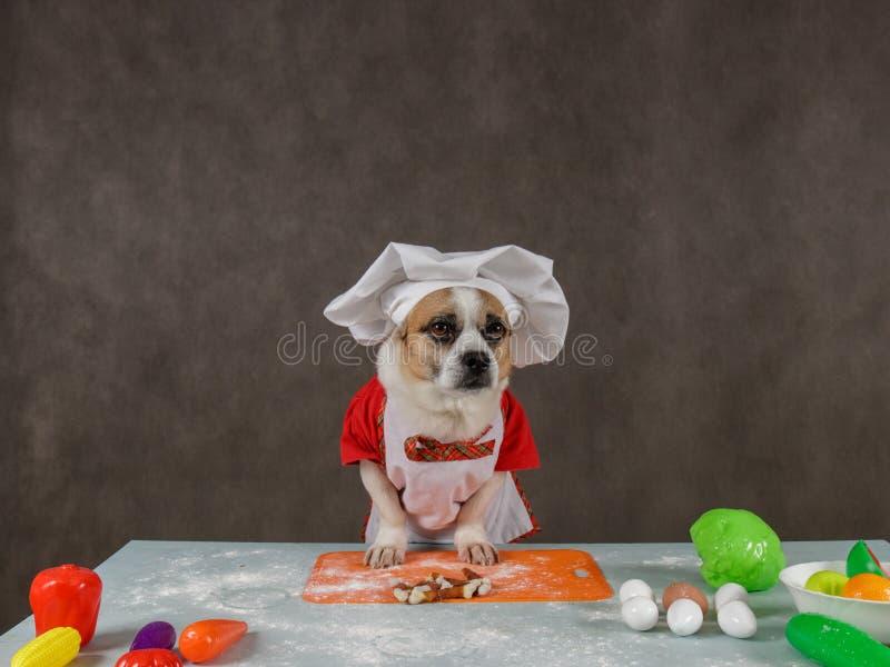 狗在做饭 免版税库存照片