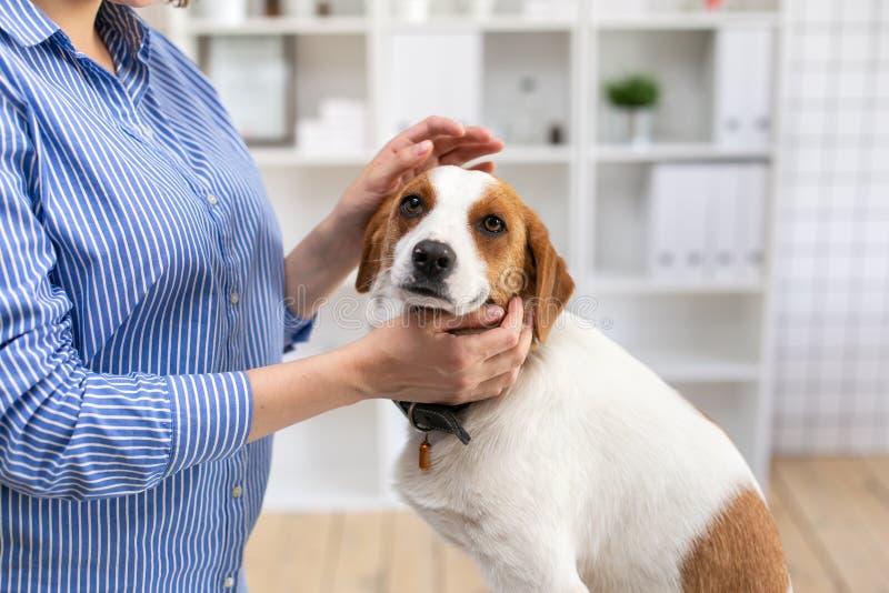狗在兽医诊所办公室 ?? r 库存照片