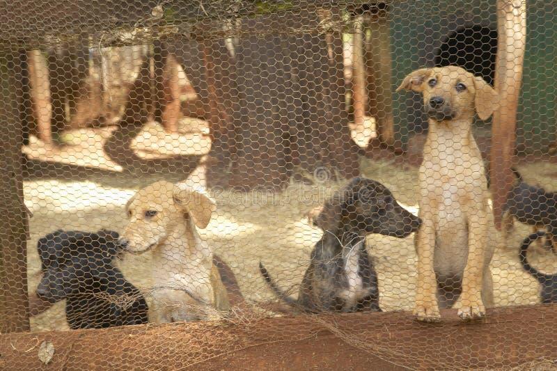 狗在动物庇护所中在内罗毕,肯尼亚,非洲 免版税图库摄影
