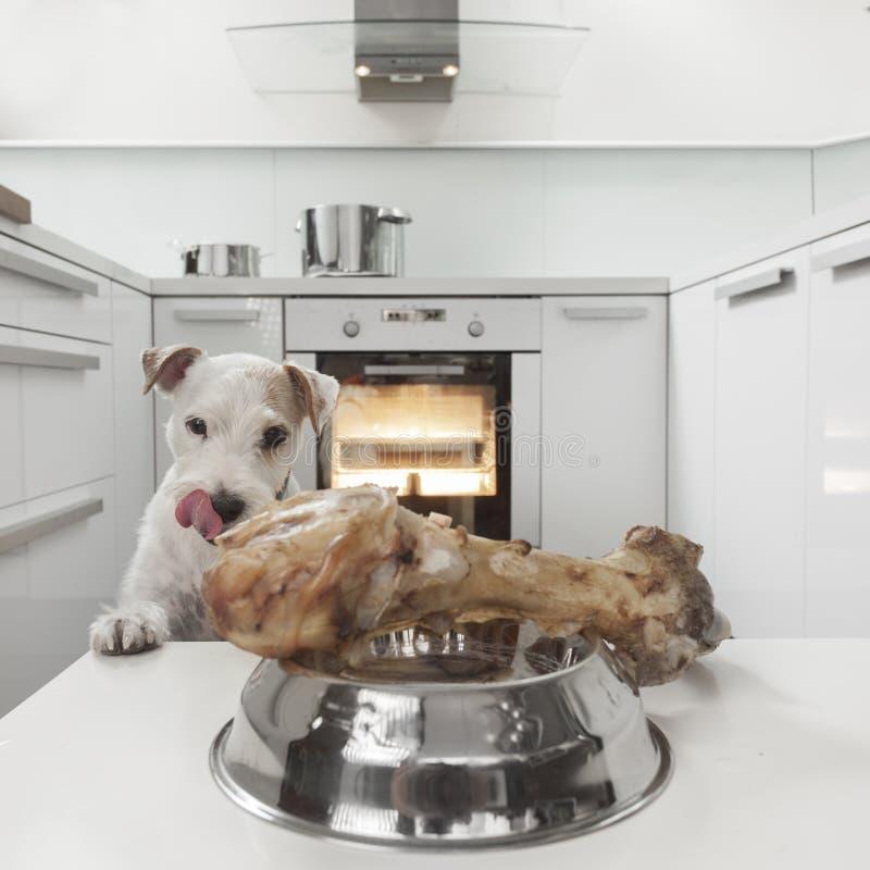 狗在厨房里 图库摄影