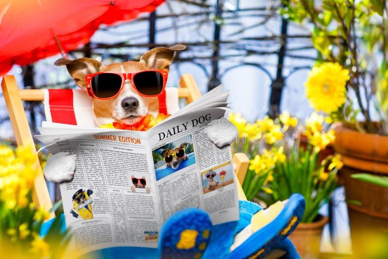 狗在吊床的暑假假期 库存图片