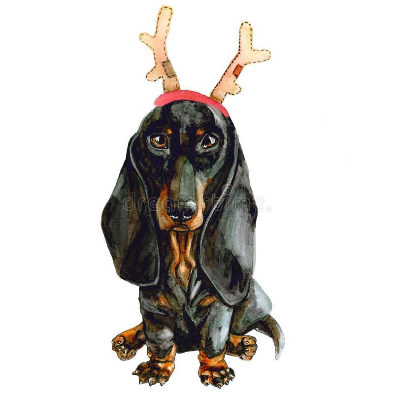 狗在圣诞老人的鹿垫铁的品种达克斯猎犬 在白色背景隔绝的圣诞节小狗 新年好 皇族释放例证