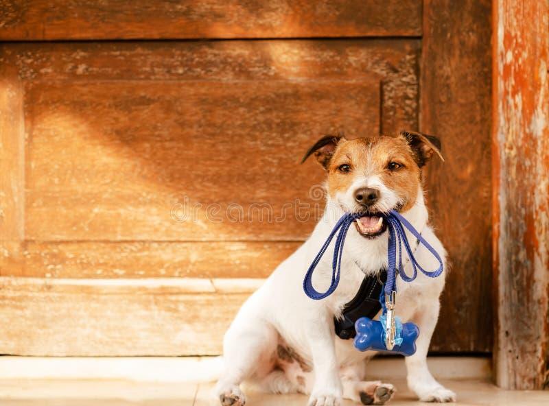 狗在坐在与船尾袋子分配器的门前面的嘴的藏品皮带附属利用 免版税图库摄影