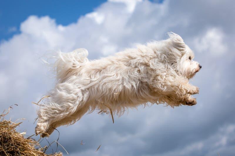 狗在天空中 免版税库存图片