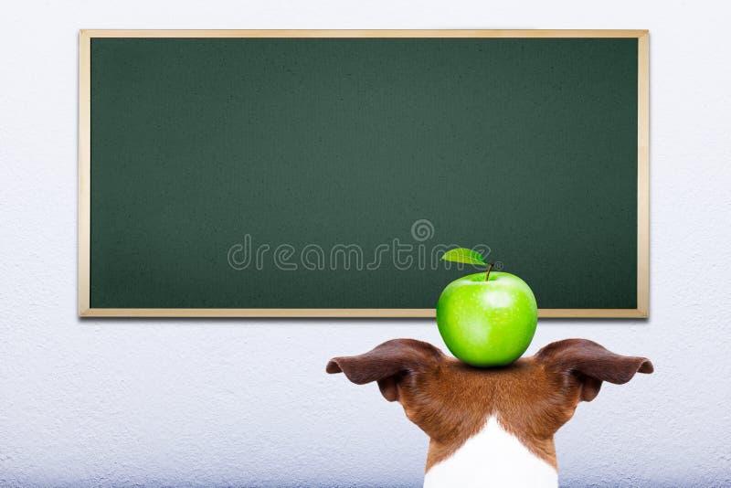 狗在学校 免版税库存图片