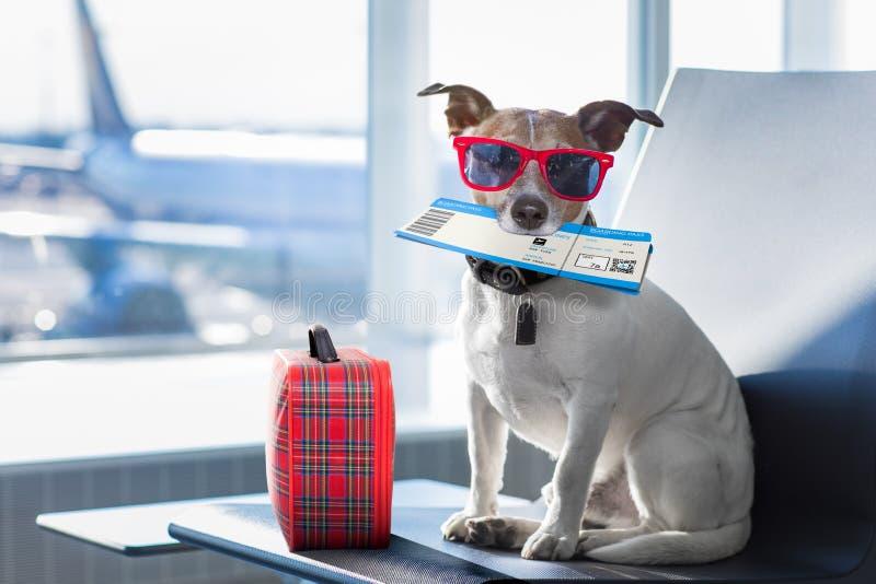 狗在机场终端在度假 免版税库存图片