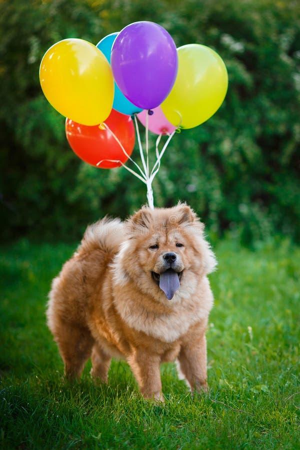 狗在气球飞行 免版税库存图片