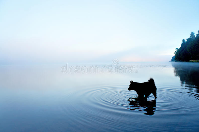 狗在湖 库存图片