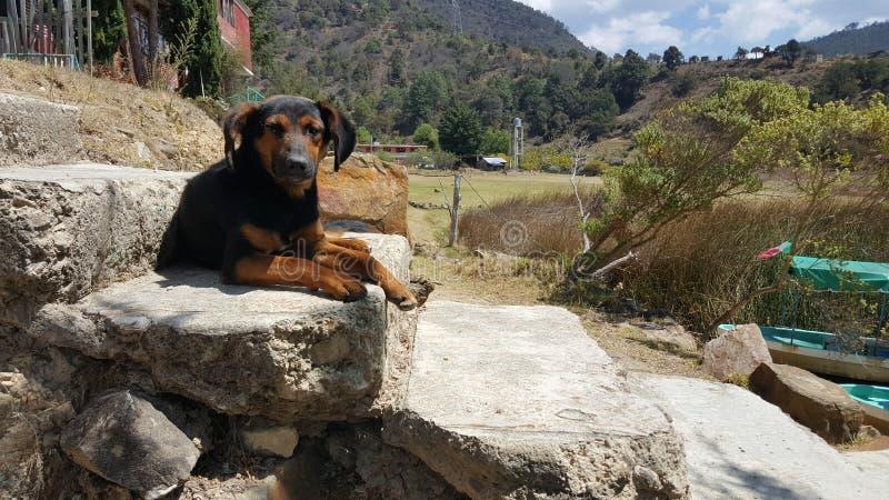 狗在盐水湖 库存照片
