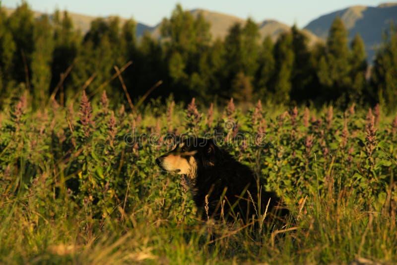 狗在种植园 图库摄影