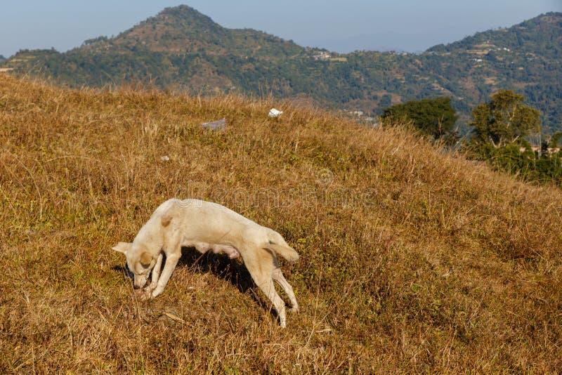 狗在草的咬骨头 免版税库存照片