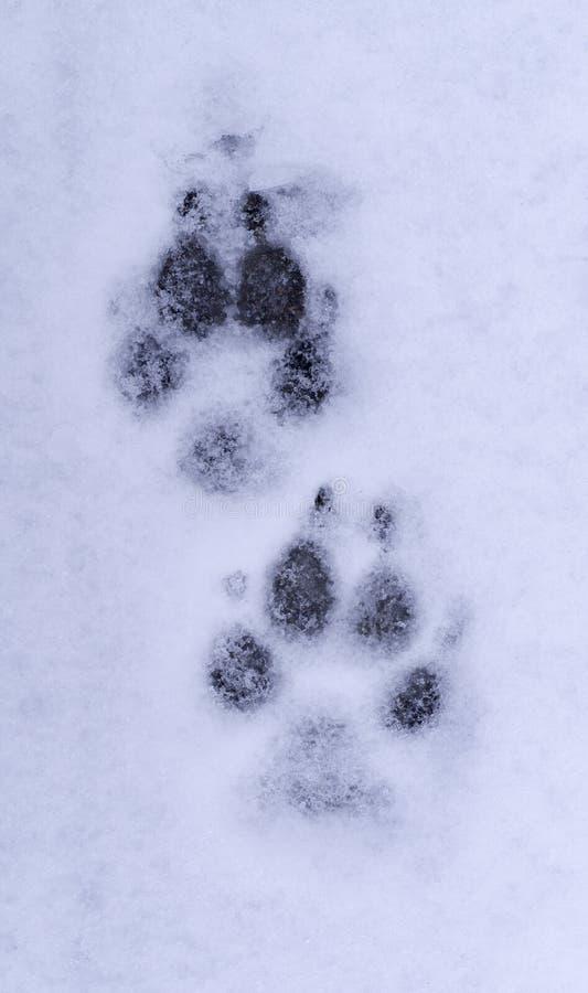 狗在雪的爪子印刷品 背景 库存照片