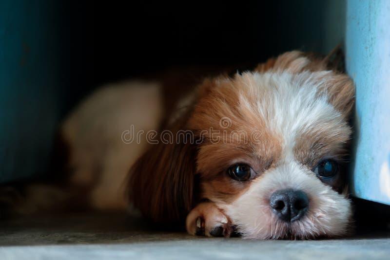 狗在黑暗的角落在 库存照片