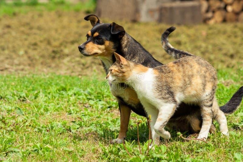 狗坐草,并且猫摩擦反对他 美好的动物友谊 库存图片