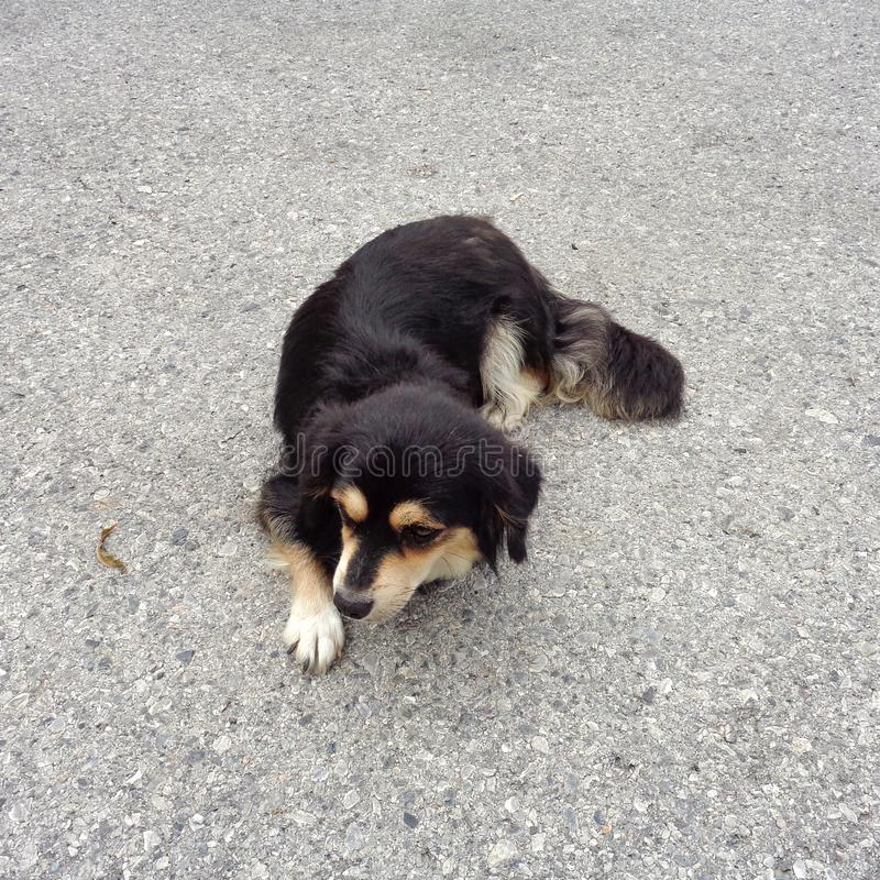 狗坐路面边路 库存图片