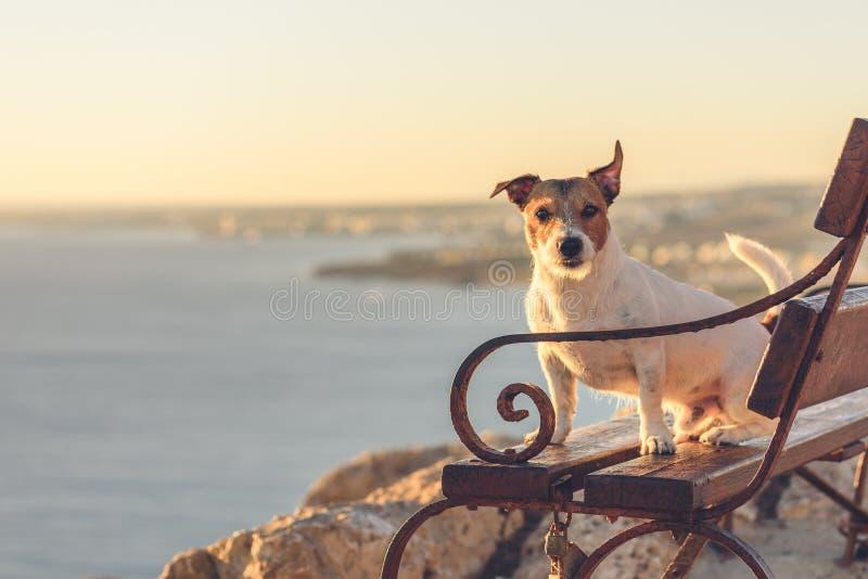 狗坐长凳在海角格雷科,Ayia Napa,塞浦路斯观点 库存照片