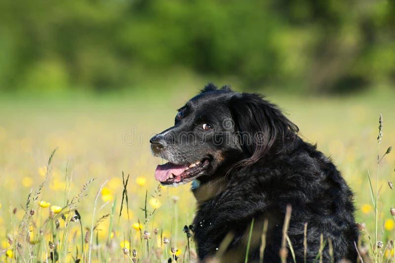 狗坐绿草 库存图片