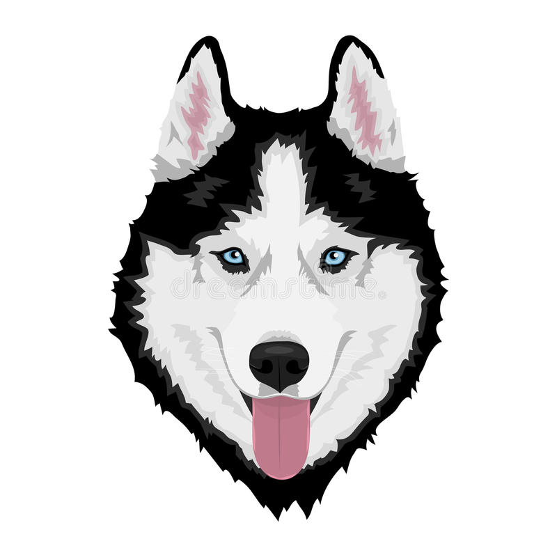 狗多壳的西伯利亚人 库存例证