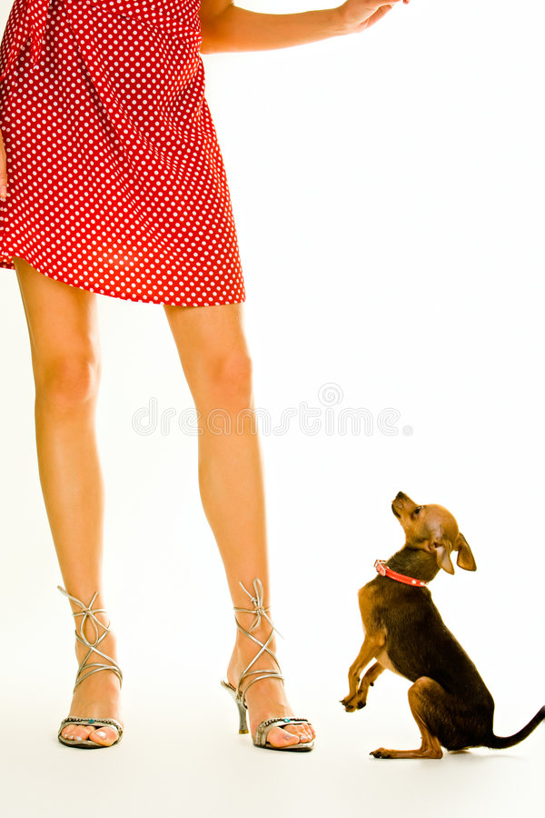 狗夫人 库存图片
