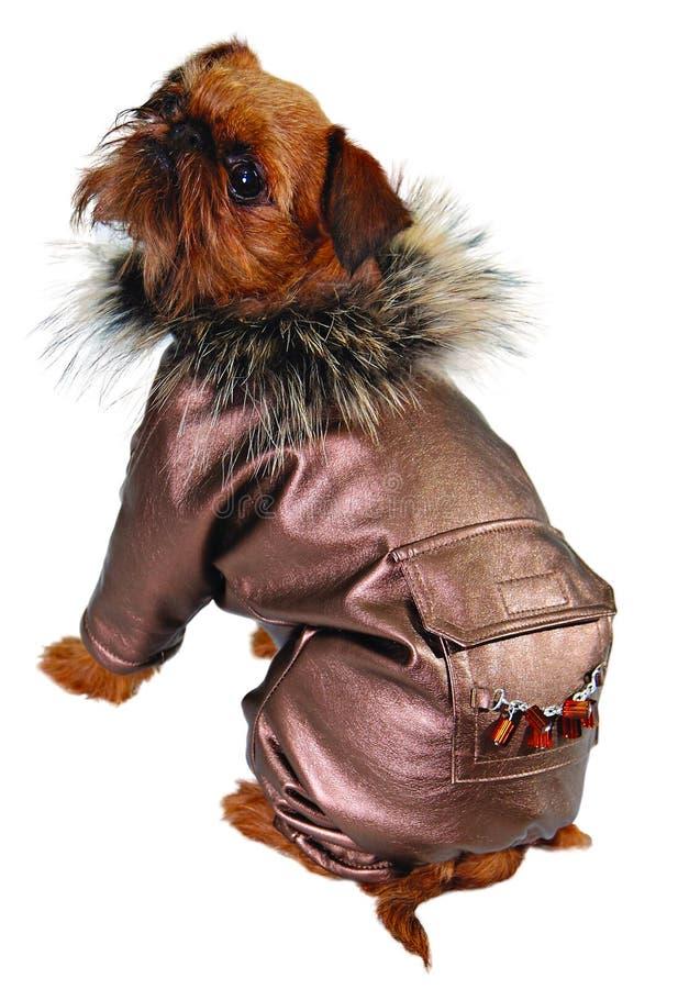 狗夹克皮革 库存图片