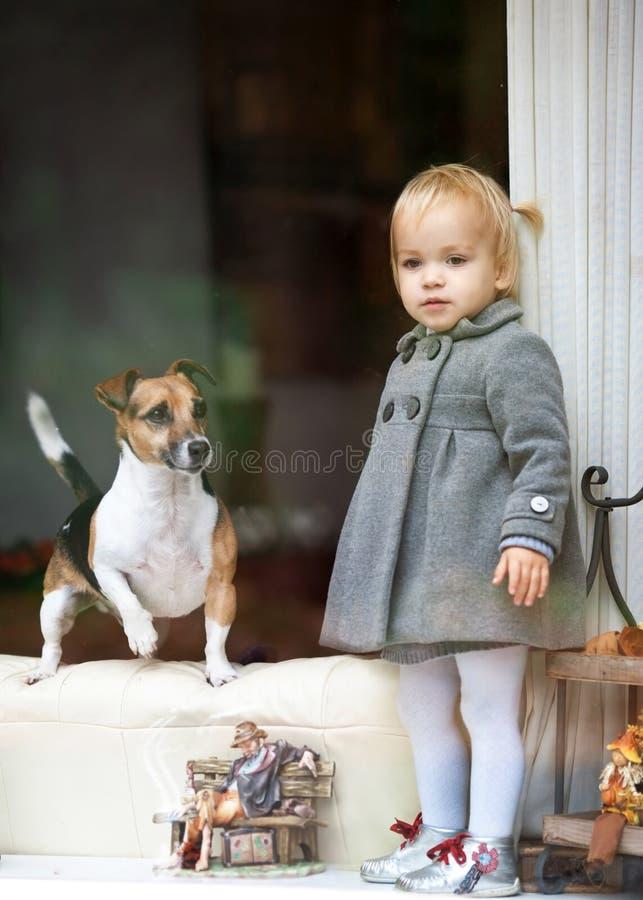 狗女孩查找视窗 库存图片