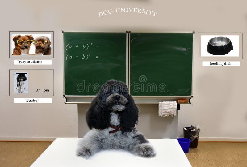 狗学校和老师教室  免版税库存图片