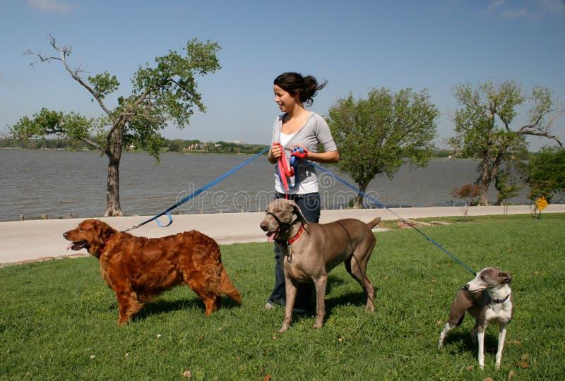 狗宠物临时替人照看孩子的人步行者 免版税库存图片
