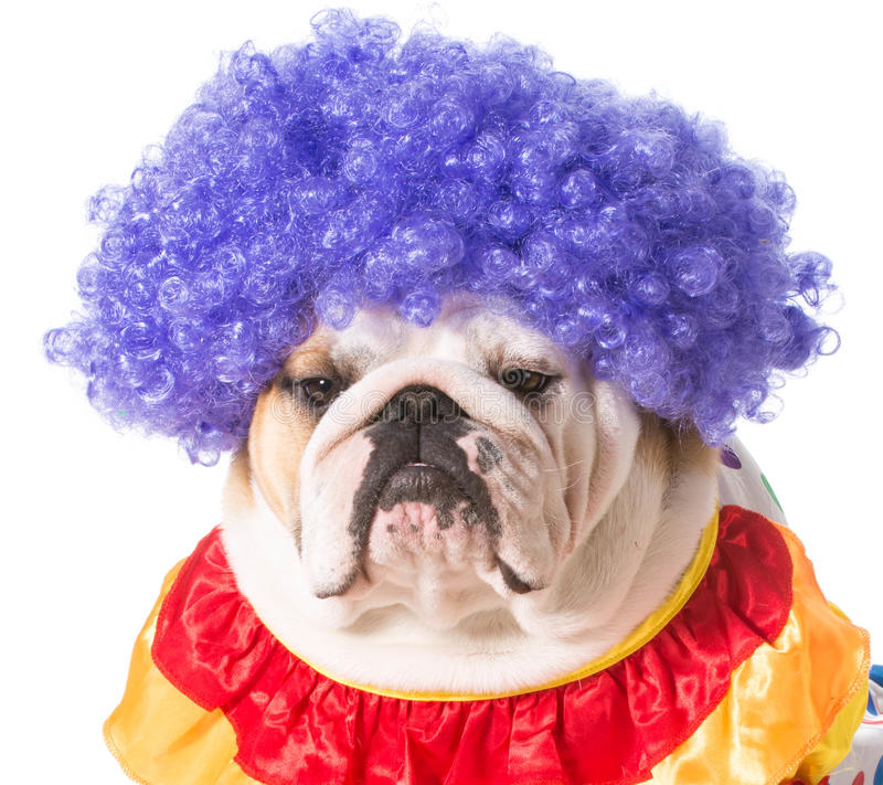 狗小丑 免版税库存图片
