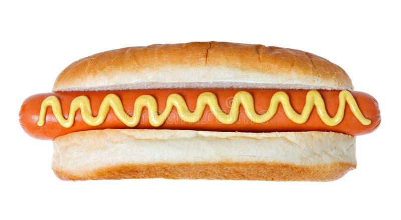 狗巨型热 免版税库存图片