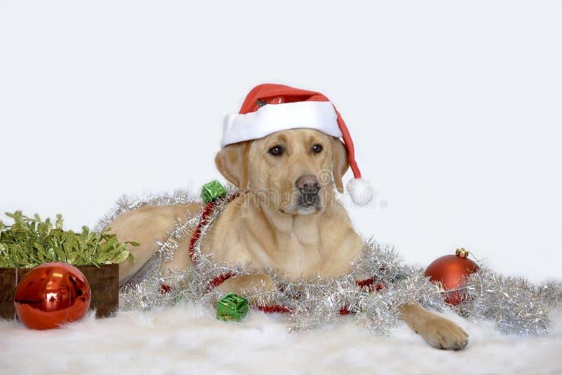狗帽子圣诞老人 免版税库存图片