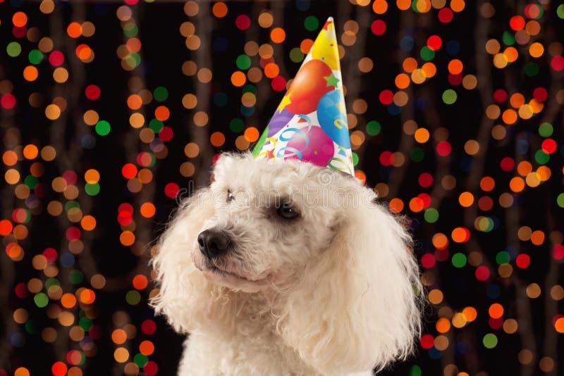 狗庆祝生日的派对狂 免版税图库摄影