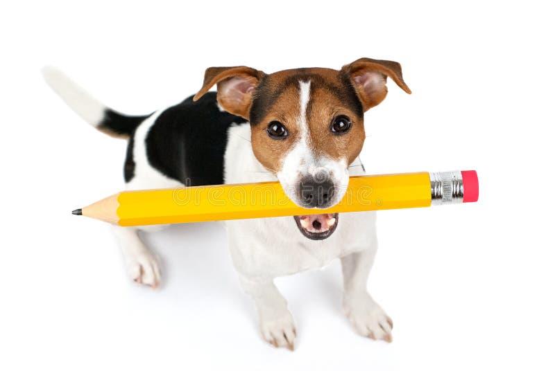 狗开会和举行大黄色铅笔顶视图  图库摄影