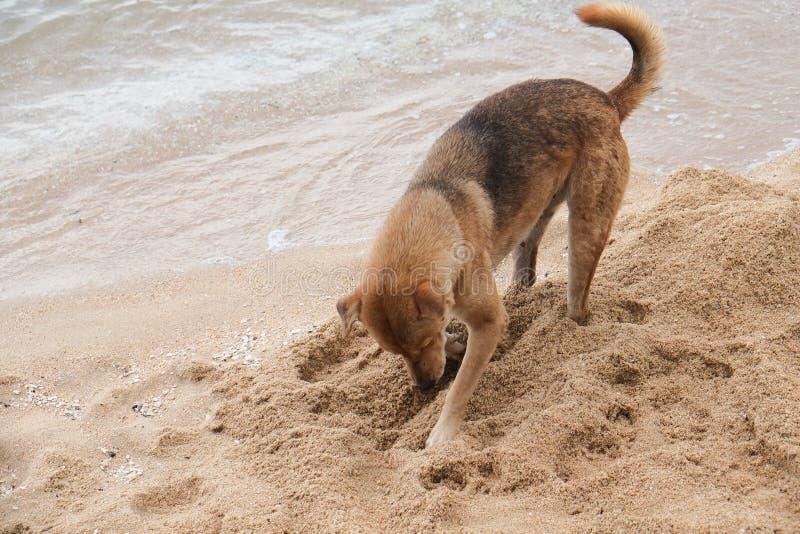 狗开掘 免版税图库摄影