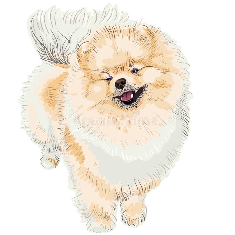 狗微笑波美丝毛狗向量 皇族释放例证