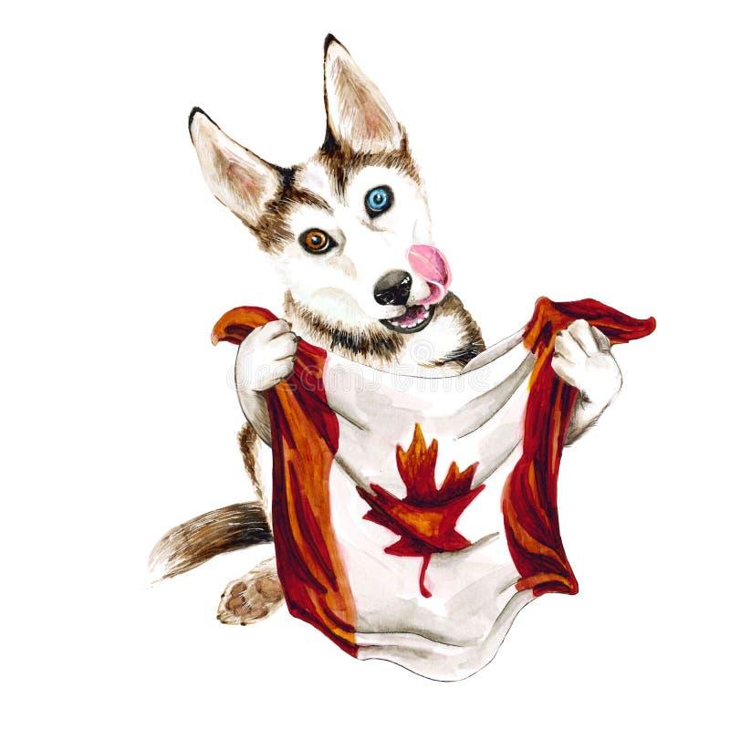 狗拿着加拿大旗子的品种爱斯基摩 多伦多 r ?? ?? 库存例证