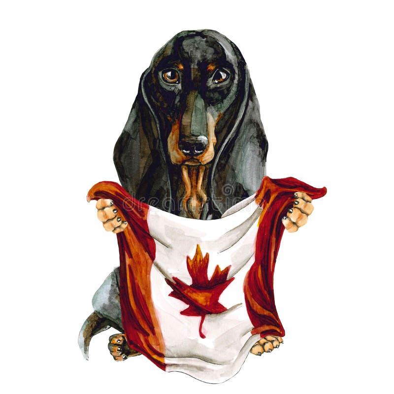 狗拿着加拿大旗子的品种达克斯猎犬 多伦多 r ?? 向量例证