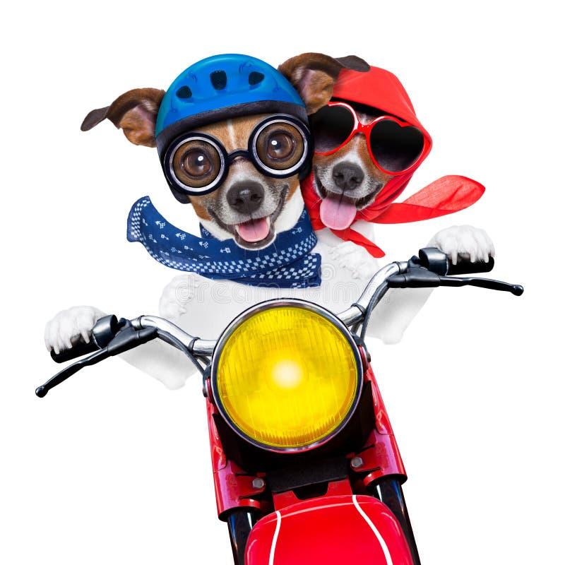 狗摩托车夫妇  免版税库存图片