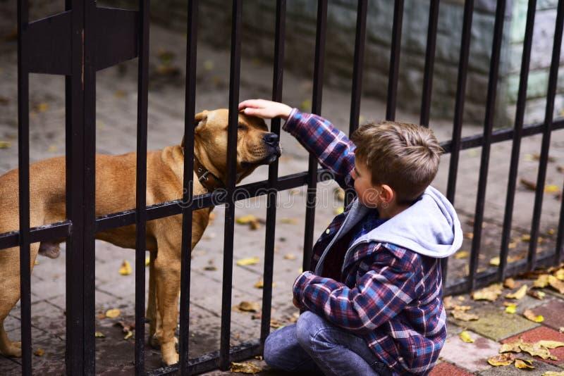 狗是有用的 小男孩使用与在狗避难所的狗 轻拍在头的小男孩狗 在需要的一条狗需要更比 库存照片