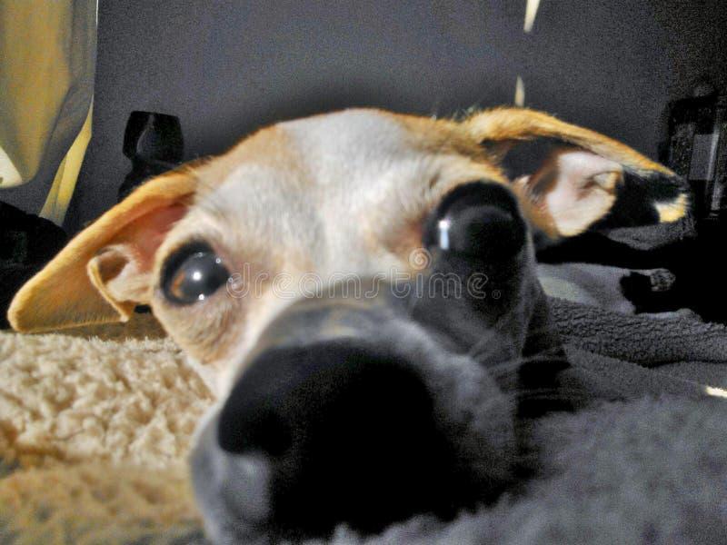 狗是爱 库存图片